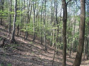 Photo: Lišće je dobilo pastelno zelenu boju