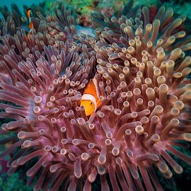 Photography by Tomonori Takahashi by Sam Song - Landscapes Underwater ( corals, underwater, nemo )