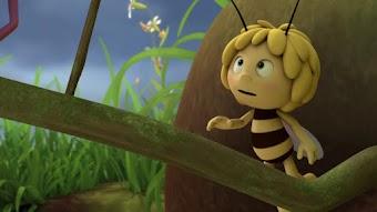 Mrs Hermit Beetle's Journey