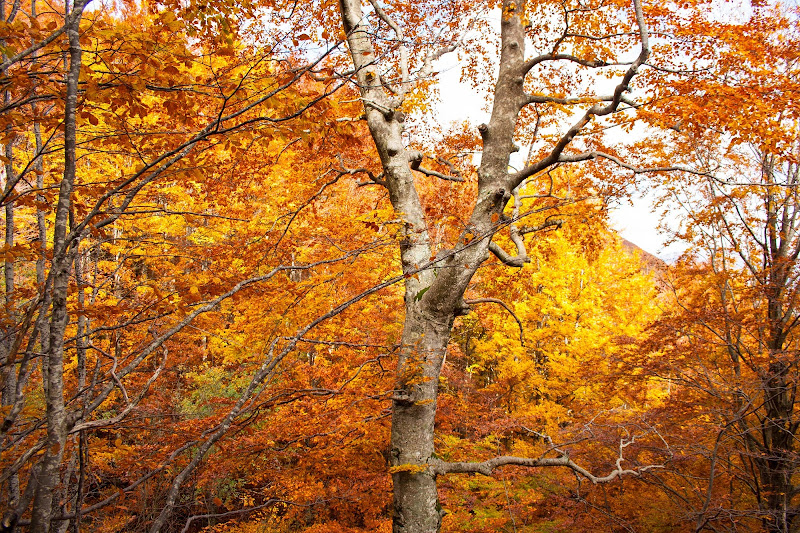 colori di autunno di France94