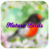 Nature Birds Live Wallpaper