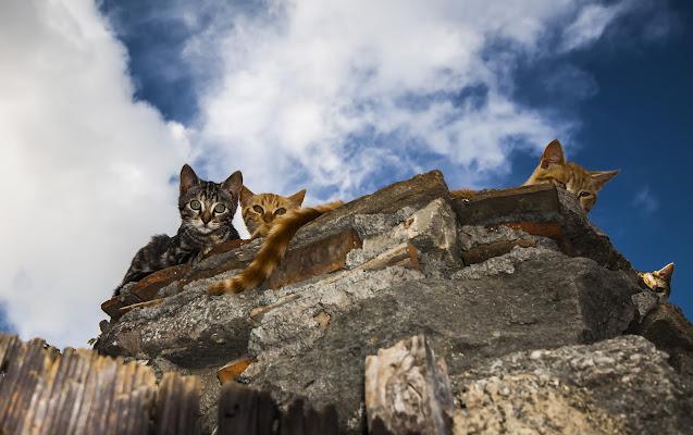 Quattro gatti. di Pino1963