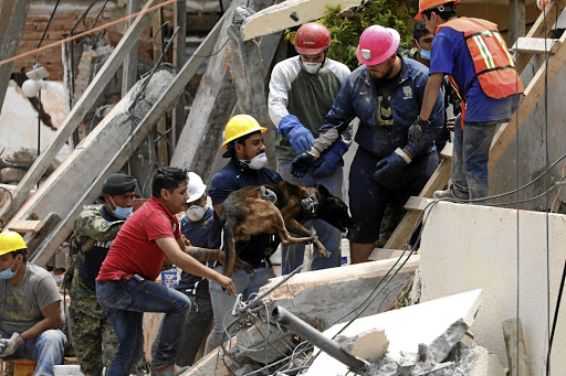 A Rescue Worker Holds Dog During The Search For Students At Enrique Rebsamen School After