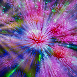 by Jim Jones - Abstract Patterns ( art, flowers, color, pattern, abstract )