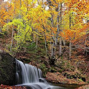 autumn river by Naiden Bochev - Landscapes Waterscapes ( water, mountain, tree, waterscape, autumn, waterfall, trees, landscape, river )