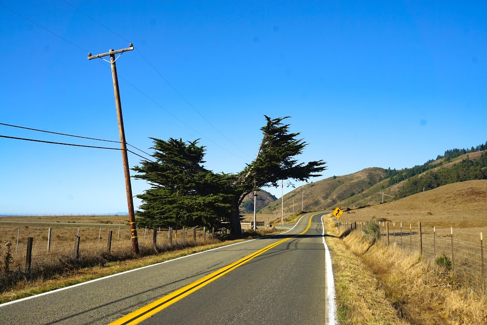 The evolution of a roadside tree - Sonoma County, California