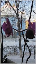 Photo: Orhidee (Orchidaceae) de la geamul meu - 2018.03.01