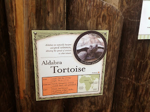 Photo: info about the Aldabra Tortoise