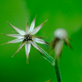 Natural pearl by Shovan Sam - Flowers Flowers in the Wild ( canon )