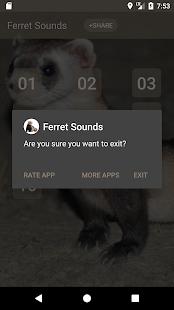 Ferret Sounds - náhled