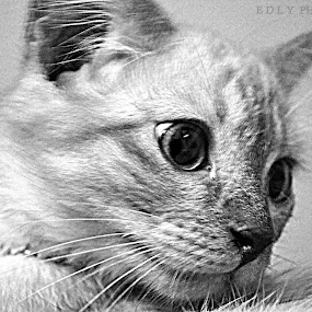 by Adi Adlee - Animals - Cats Kittens
