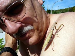 Photo: Gottesanbeterin (Mantis religiosa), in unserem Garten /at our garden.