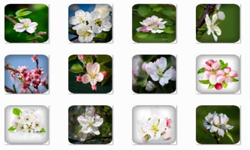 Apple Blossom Connect Game