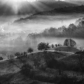Sunset by Attila Ádám - Black & White Landscapes ( maramures, fog, sunset, trees, landscape, misty, black&white )
