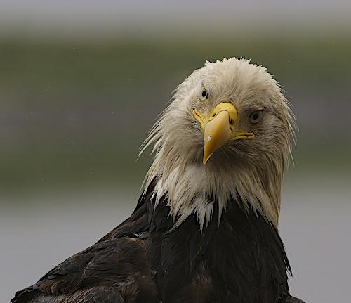 Questions? by Capt Jack - Animals Birds ( Bird in flight, bif )
