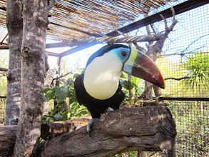 Photo: Tickets/Entradas www.excursionesbenidorm.com