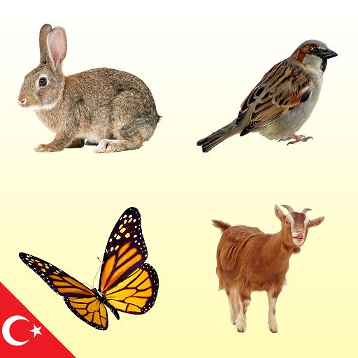 Hayvan Sesleri Hayvan Resimleri