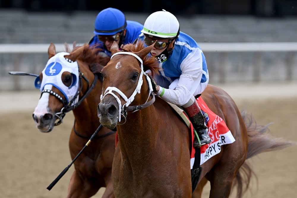 Happy Saver derrotó a los mayores en la Jockey Club Gold Cup y sigue invicto
