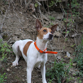 I'm ready to run by Glenna Faye - Animals - Dogs Portraits