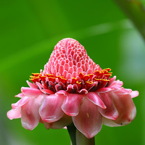 after the rain by Goddes Puffz - Nature Up Close Other plants ( #nature, #wild, #plants, #rain, #flower )