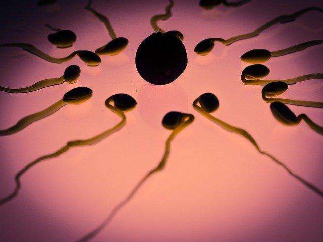 starting of ovulation