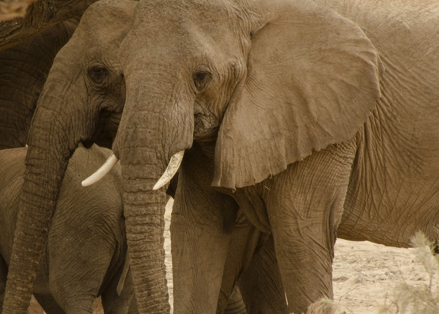 by Cassandra G - Animals Other Mammals