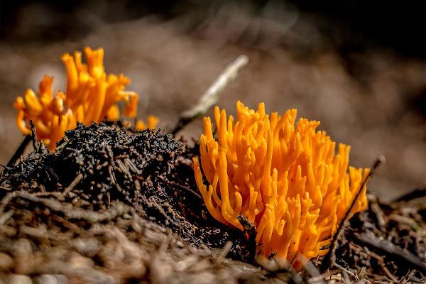 Coralli del bosco di Jiggly