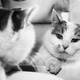The Mirror Never Lies by Bogdan Rusu - Animals - Cats Portraits ( mirror, reflection, cat, black and white, portrait cat )