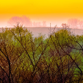 Sunrise by Garnie Ross - Nature Up Close Other plants ( abstract, tree, color, sunrise, sun )
