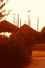 Photo: Ooievaars op de palen van een hooiberg.