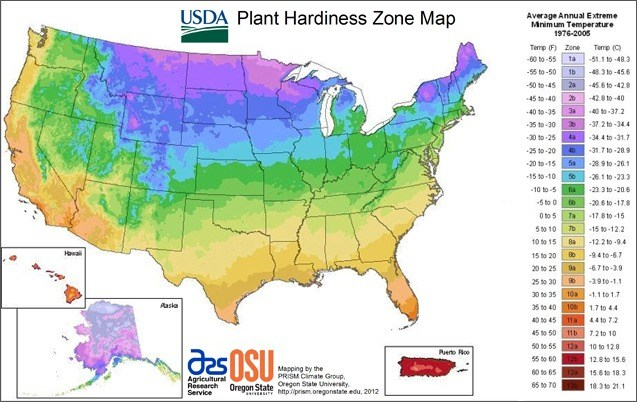 USDA Plant Hardiness Zone Map will tell you when to plant your dahlia tubers