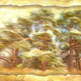 The Trees by Al Duke - Landscapes Forests