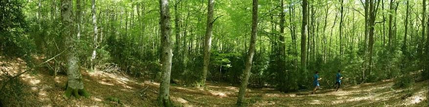 Photo: dos corredores por el bosque