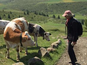 Photo: Lexie teaching English to Italian cows