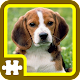 Jigsaw Puzzles - TIERE