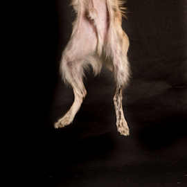 High Jump by Myra Brizendine Wilson - Animals - Dogs Playing ( dogs, foster dog, canine,  )