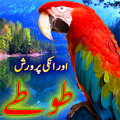 Parrot Care in Urdu