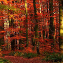 Autumn Forest HD Wallpapers Tab Theme