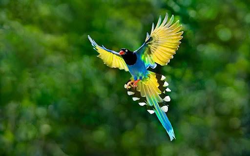 ニース鳥はパズル