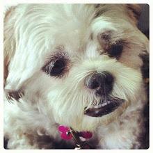 Photo: A pet portrait - a friend's dog #intercer #dog #doggy #dogs #dogoftheday #instapet #animal #pet #pets #petstagram #cute #cutie #dogstagram #dogsofinstagram #life #puppy #adorable #precious #instagramdogs #face #funny #smile #eyes #portrait - via Instagram, http://instagr.am/p/Qy6lnZJfku/