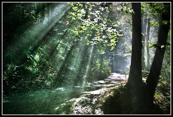 Il bosco incantato di Nemeth