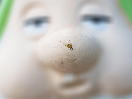 La mosca al naso di felixpedro