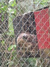 Photo: Sloth