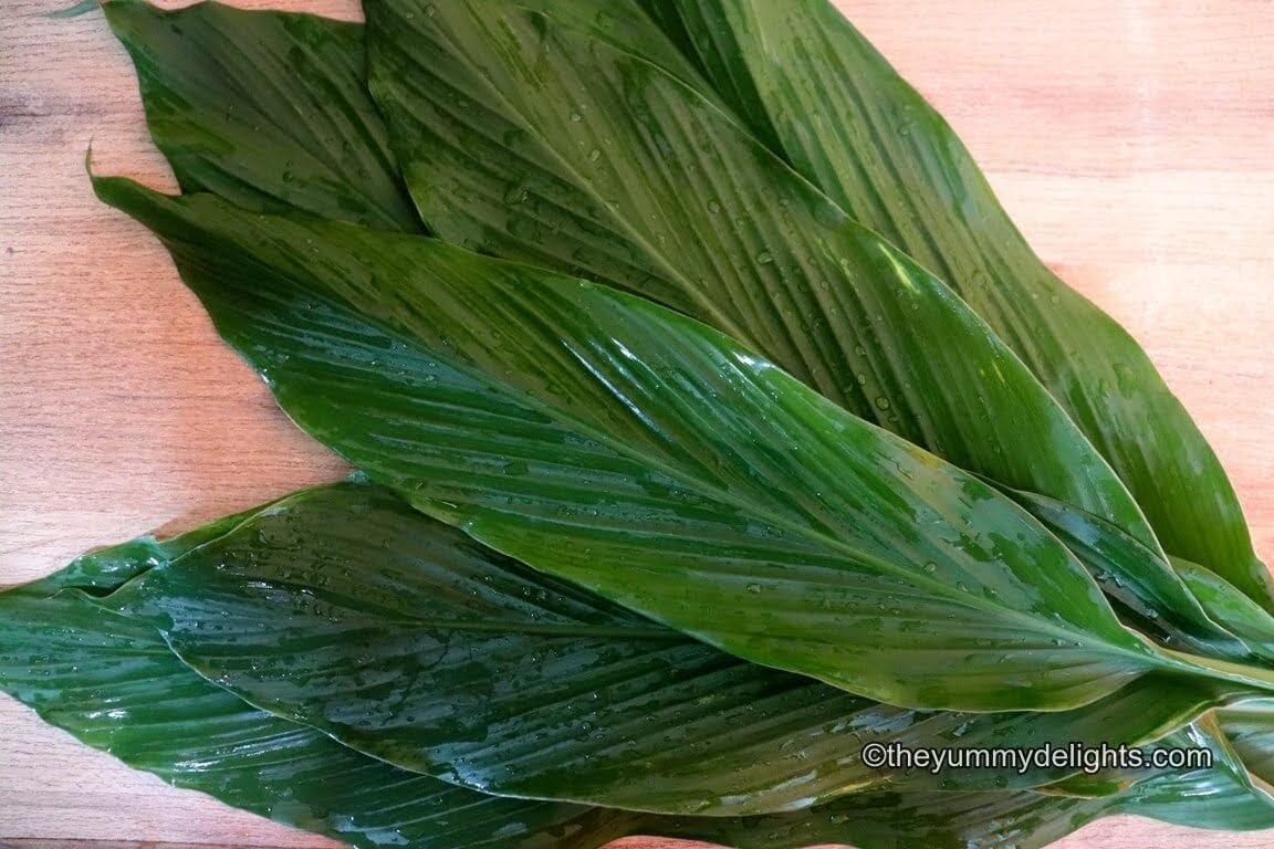 image of fresh turmeric leaves.