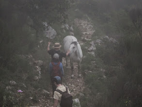 Photo: On the other side, a horse blocks the trail.