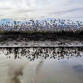 Cotton Field Reflections by Kathy Suttles - Instagram & Mobile Android (  )