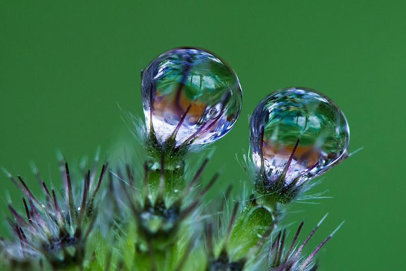 piccoli dettagli in Natura di tispery
