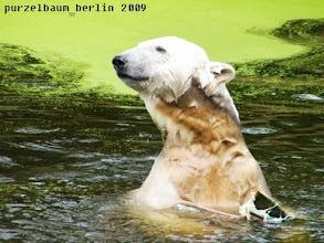 Photo: Ausschau halten...