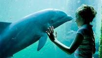 Дельфинарий в Harderwijk