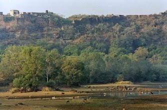 Photo: Ranthambhore Park has ancient citadel ruins within it